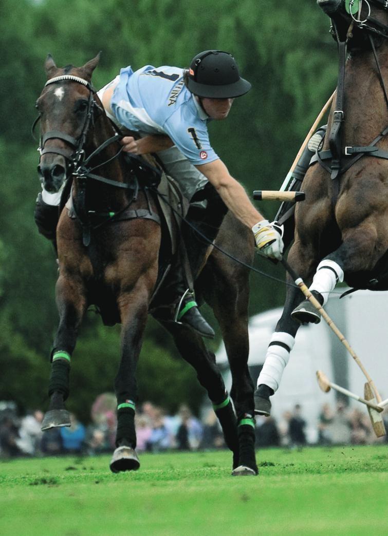 Polo Action Horsing Around Horses