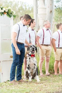 7 Ways To Include Your Dog In Your Wedding Dog Wedding Cat