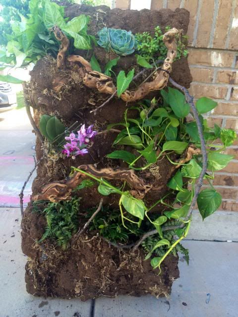 Nonehttp://www.chameleonforums.com/threads/diy-living-wall-turtorial-with-pictures.129951/