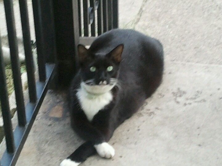 My cat Oreo, his signature paws crossing, since he was a little kitten..  <3