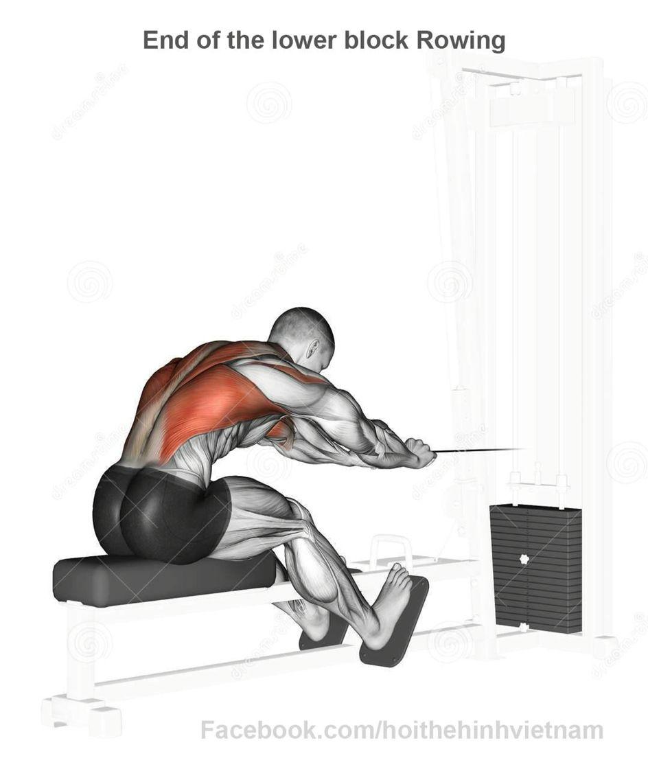 Espalda   Fisiologia/Anatomia Espalda   Pinterest   Espalda y Anatomía