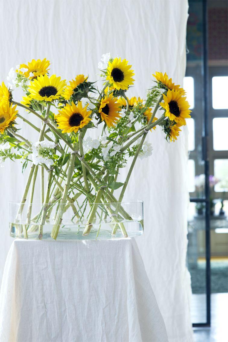 #Zonnebloem #Sunflower #Bloemen #Flowers