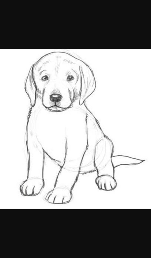 Drawing Of Dog With Images Dog Drawing Simple Dog Drawing