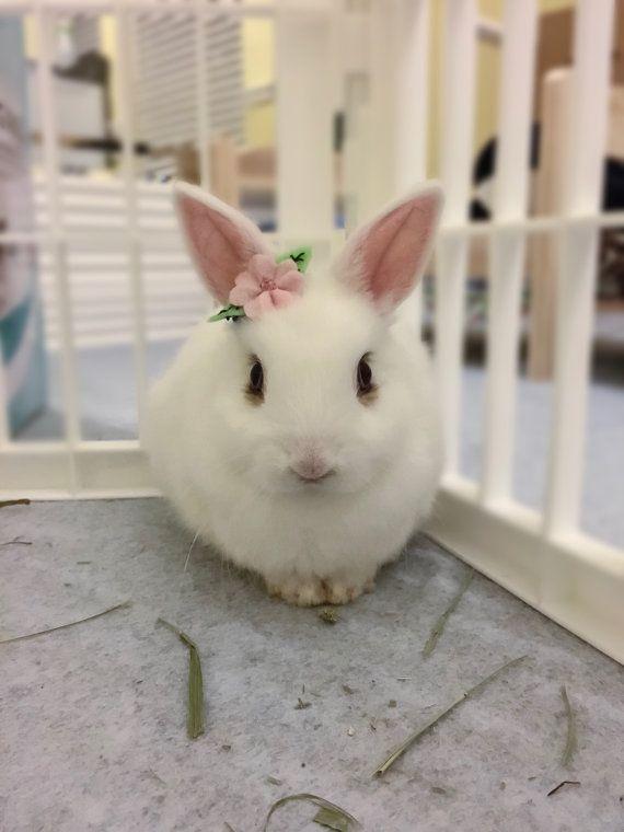 Pet Rabbit Flower Accessory Pet Rabbit Flower Crown Pet Etsy Pet Rabbit Pet Rabbit Care Cute Baby Bunnies
