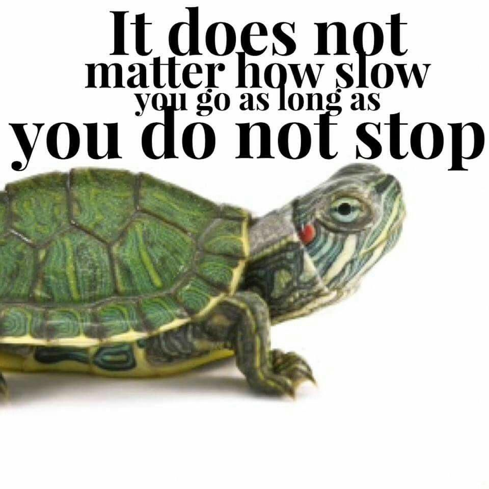 Slow And Steady Turtle Quotes Tortoise Quote Tortoises