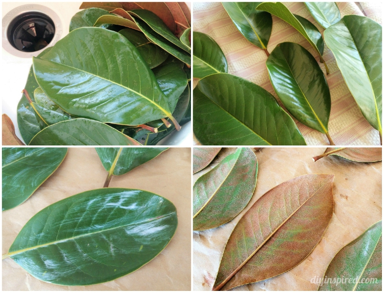 Photo of How to preserve magnolia leaves