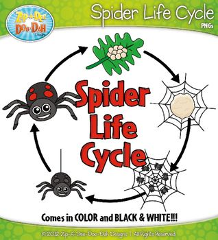 Spider Life Cycle Clip Art Set Comes In Color And Black White You Will Receive 19 Clipart Graphics That Were Hand Drawn By Myself Life Cycles Clip Art Cycle