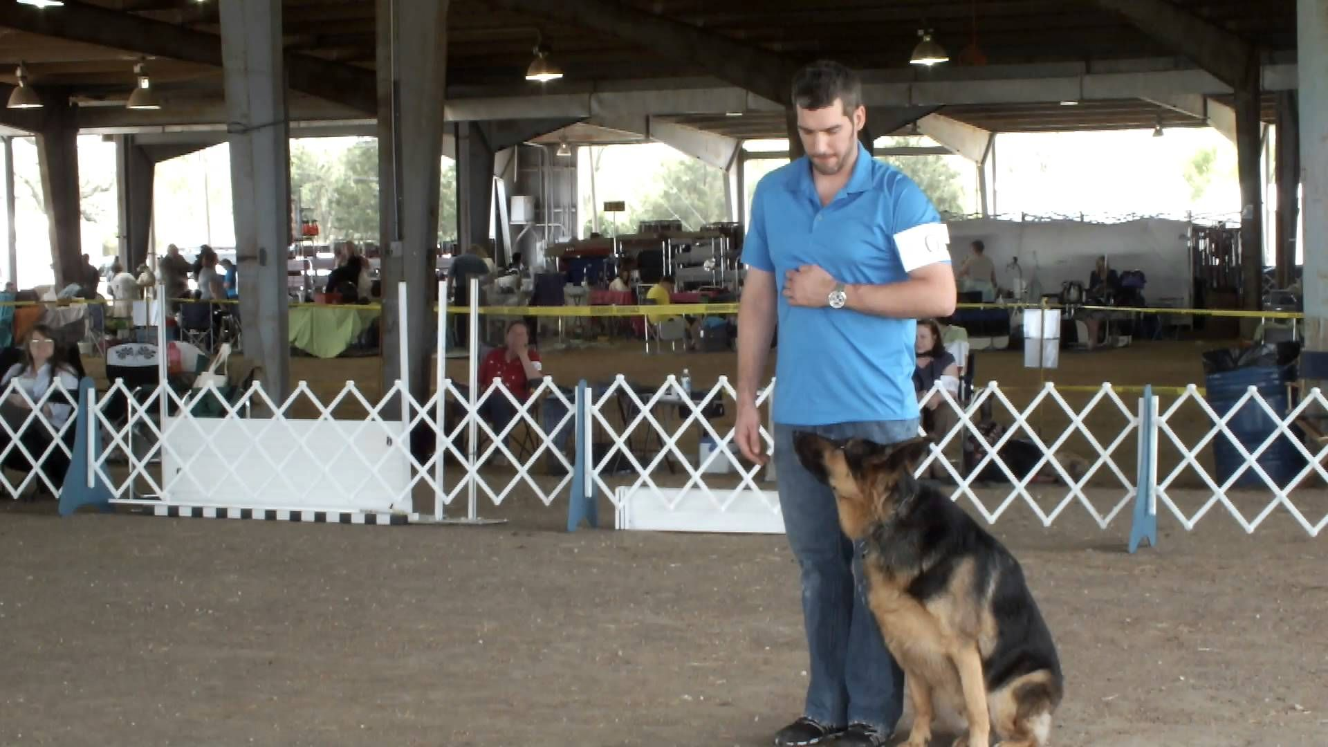 Club Canine Houston Obedience School For Dogs Dog Training