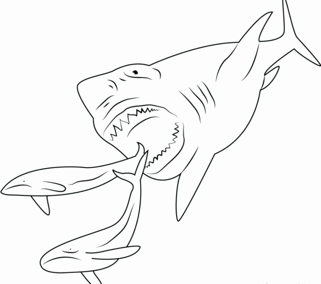 Scary Shark Coloring Pages Best Of Megalodon Coloring Pictures Redhatsheet Shark Coloring Pages Sharks Scary Animal Coloring Pages
