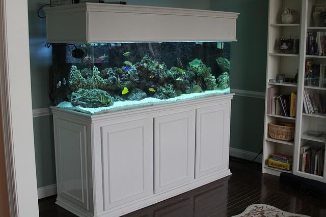 Image Result For White Fish Tank Stand Aquarium Stands In 2019