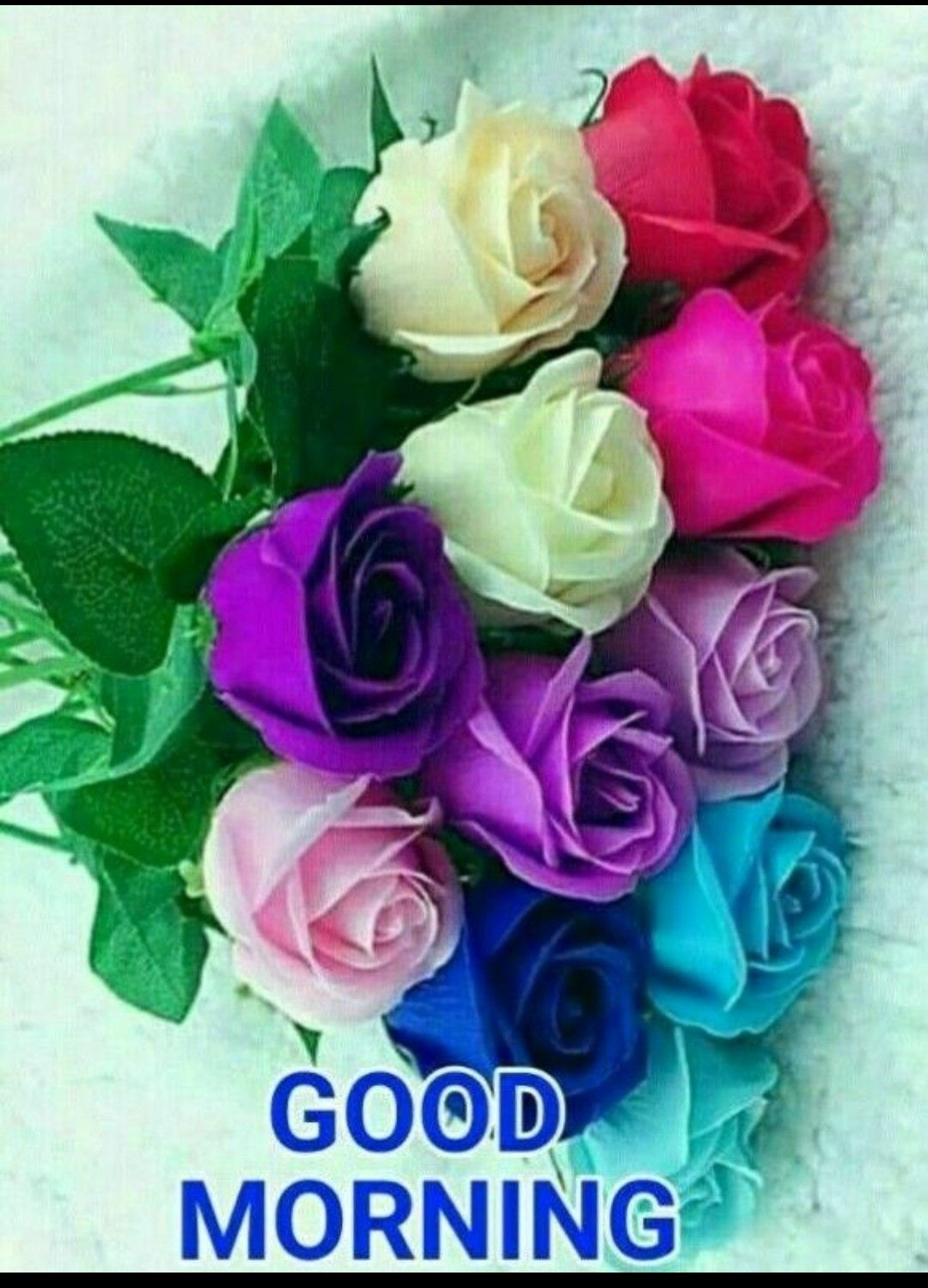 Good morning with beautiful colourful roses good - Good morning rose image ...