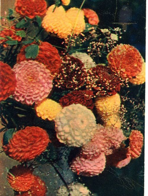 sovietpostcards:  1959
