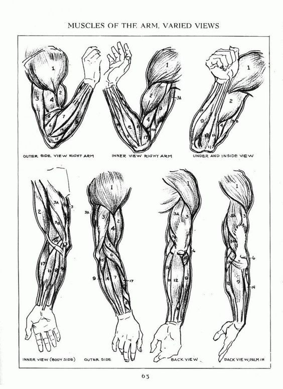 Character Design Collection: Arms Anatomy | Drawing / Animating Tips ...