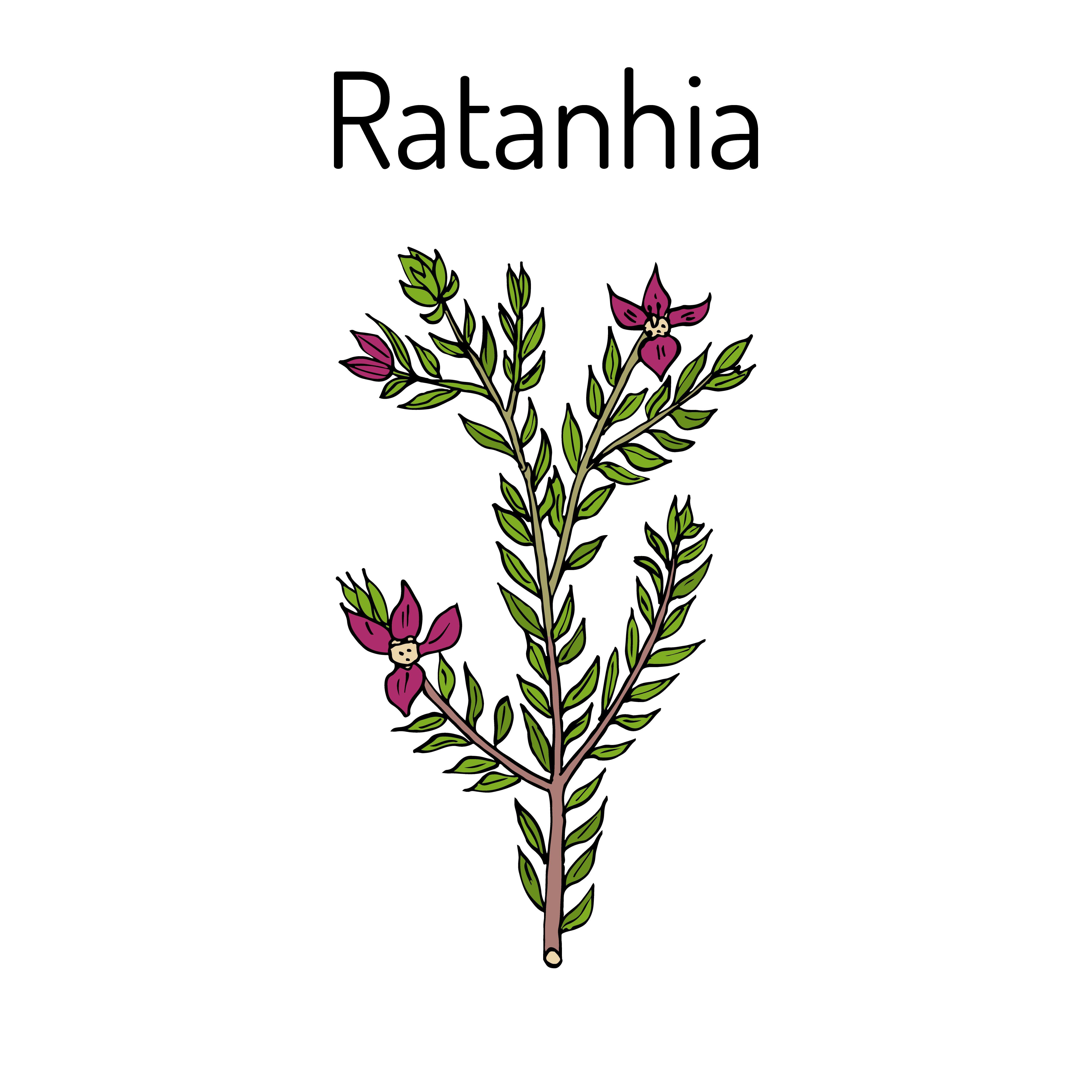 Ratanhia Pflanzenteile Hausmittel Pflanzen