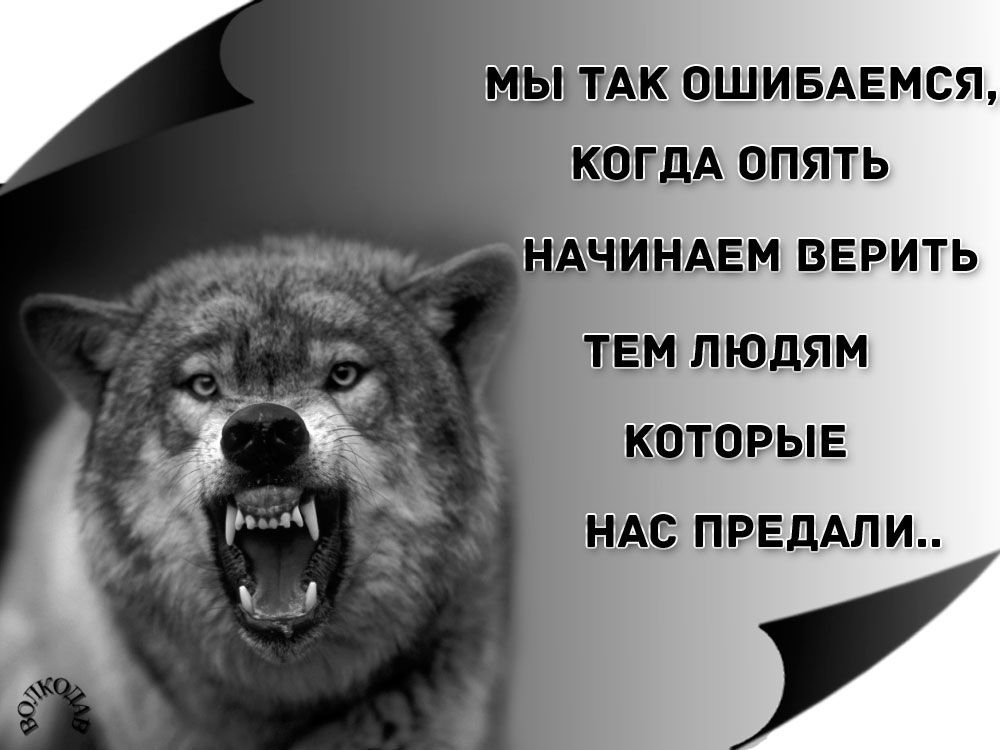 Фраза фото волков злых