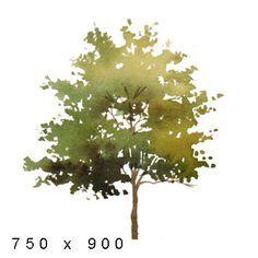 Tree Elevation Google Search Arbres Photoshop Arbres En Aquarelle Dessin Arbre