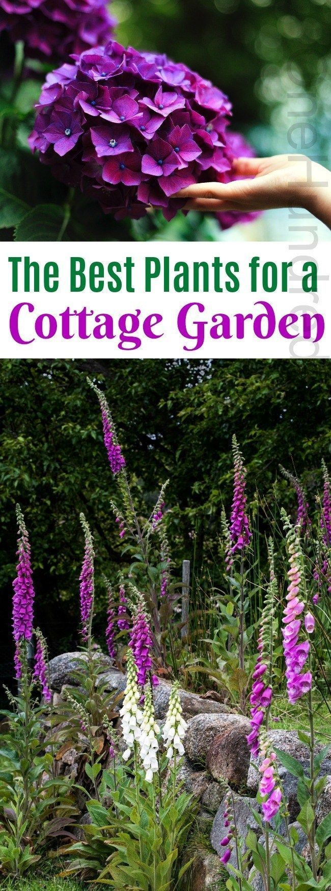 Best Pictures English Garden cottage Ideas Gardening continues to be definitely the hobby provided that Im able to remember When Id been