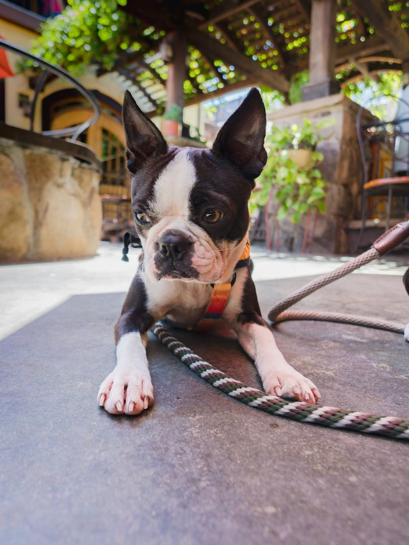 Dog Friendly Vista Instagrammable Murals And The Yellow Deli Review Dog Friends Dog Travel Dogs