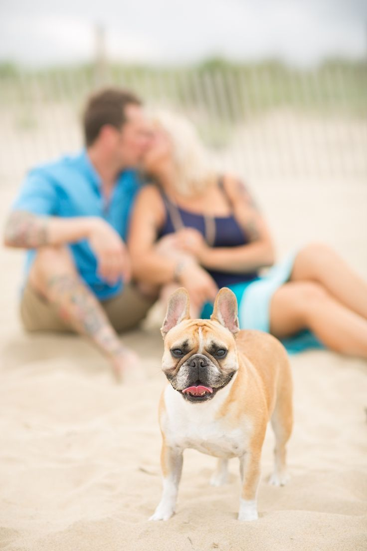 French Bulldogs Frenchies Dogs At Engagement Sessions
