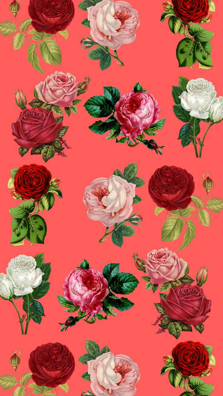 Red Roses IPhone 8 Wallpaper