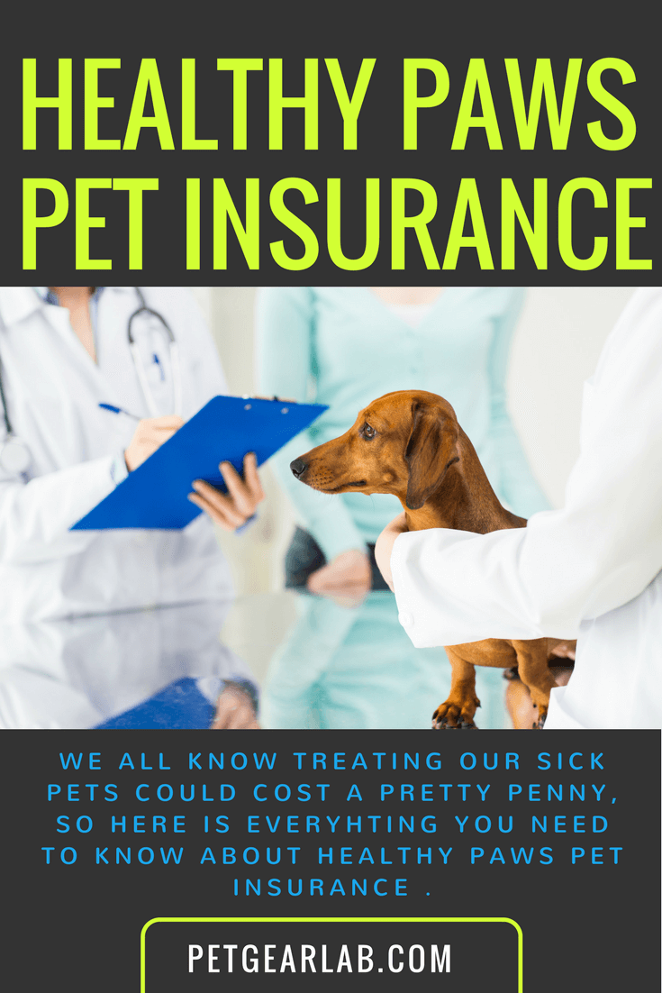 Healthy Paws Insurance Review Here's What We Thought