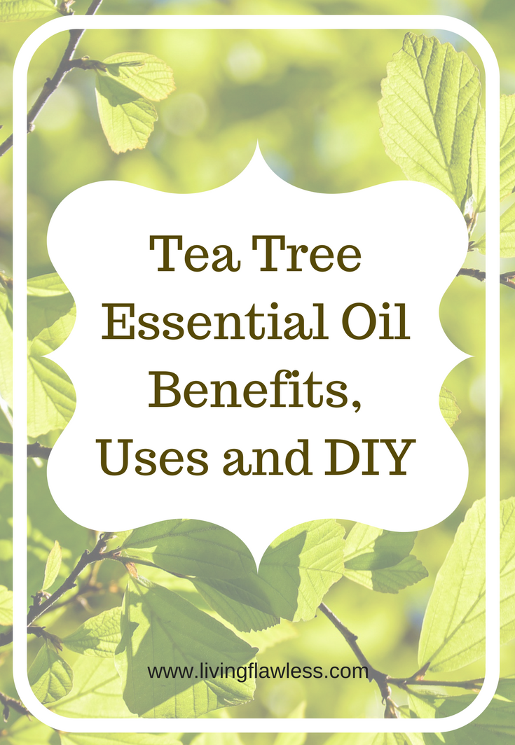 Tea tree essential oil benefits are many and numerous. Here I had stated few of the tea tree oil benefits along with some amazing DIY that will help you achieve flawless skin and hairs. #teatreeoil #essentialoil #diy #beautifulskin #skincare #haircare