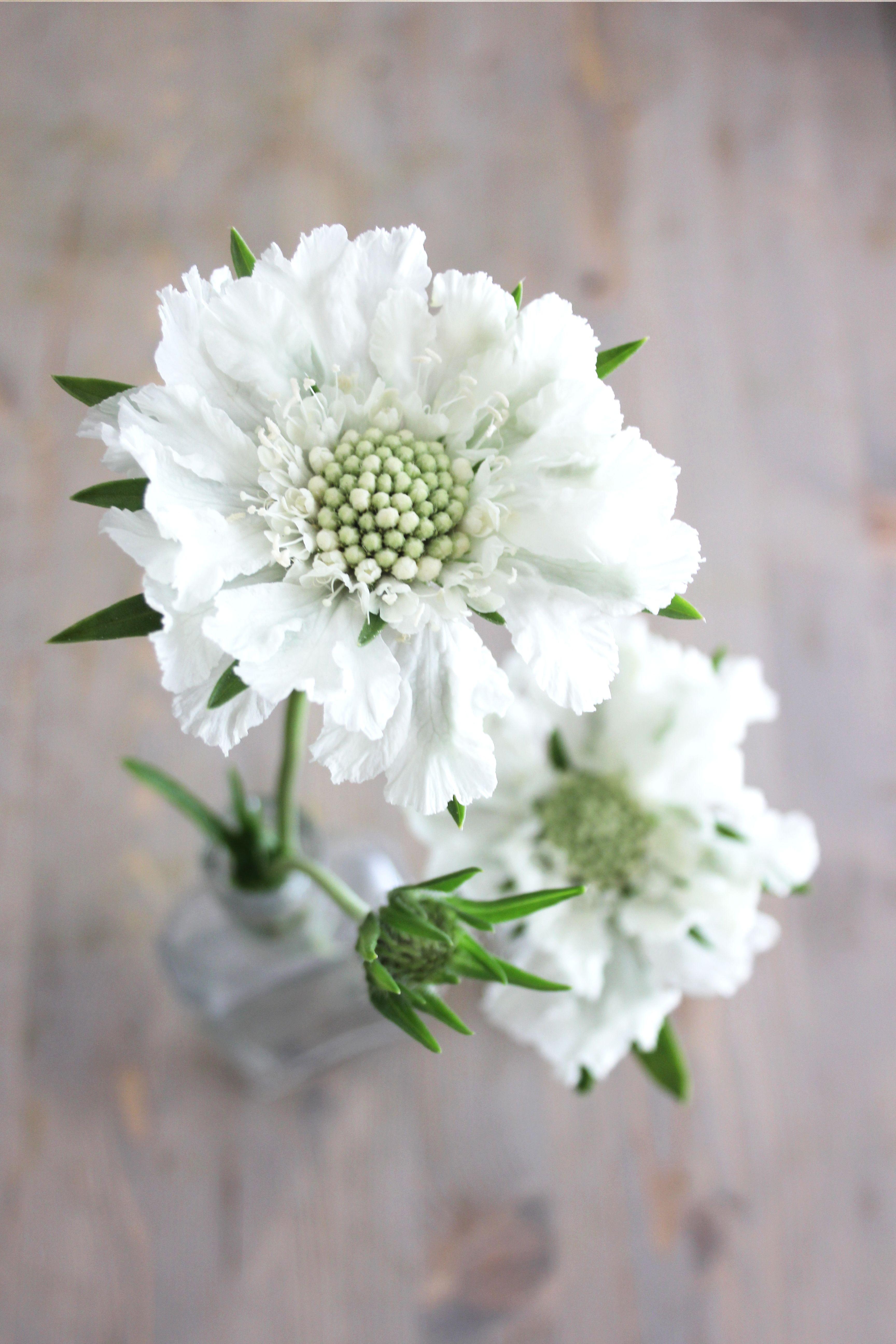 Quelles Fleurs Planter En Septembre calendrier des fleurs | fleurs juillet, fleurs septembre et
