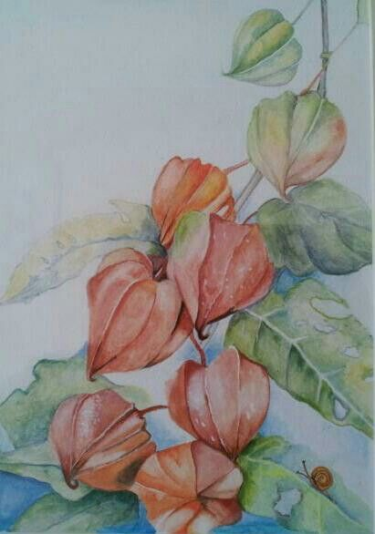 I love chinese lanterns this was my first watercolor for My first watercolor painting