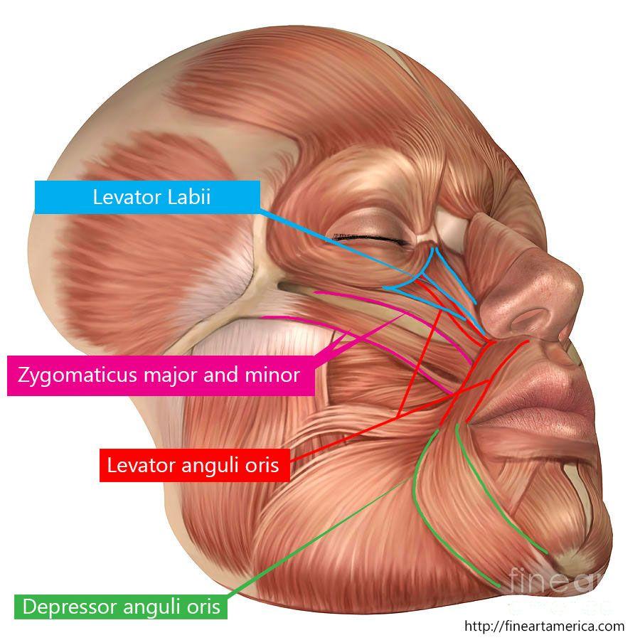 Anatomy Eye And Ear Tempat Untuk Dikunjungi Pinterest