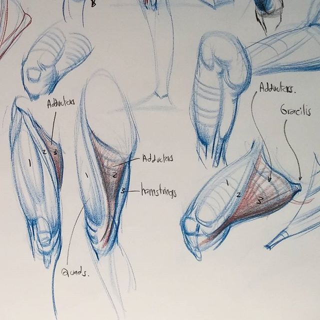 Quad squad #art #muscles #figure #figuresketch #sketch #drawing ...