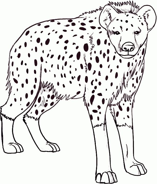 The Best Hyena Coloring Page Http Coloring Alifiah Biz The