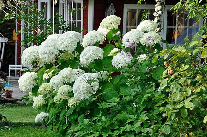 49+ Garten busch mit blueten Trends