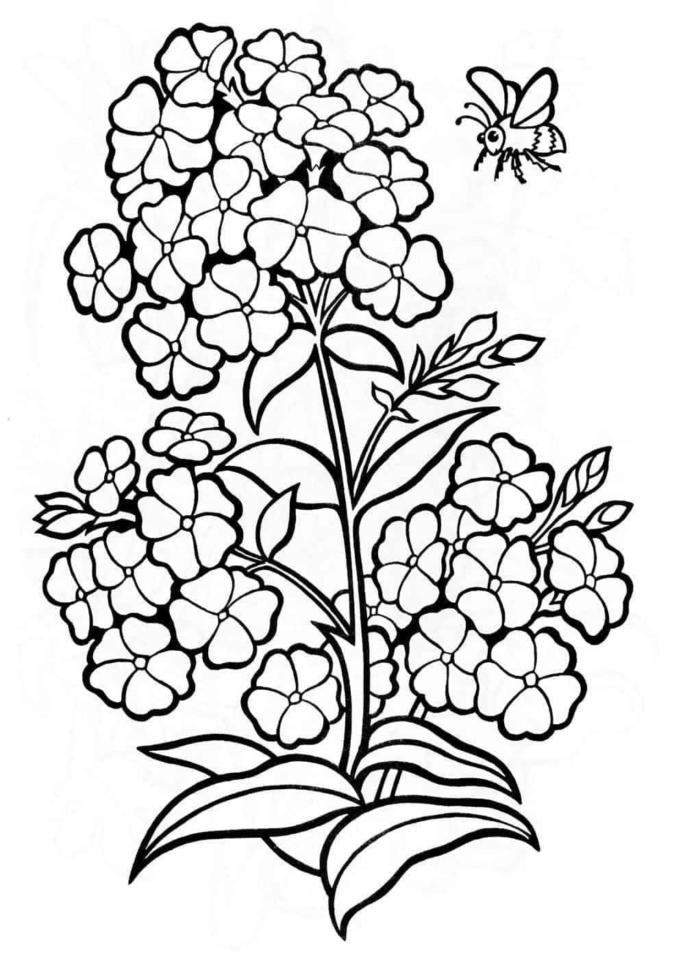 Tropical Flower Coloring Pages Flower Coloring Pages Tropical