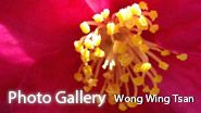 Photo Gallery by Wong Wing Than