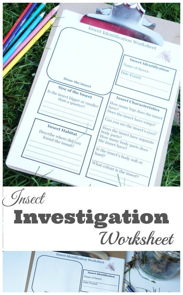 Insect Investigation Worksheet for Kids | Learning - Themes ...