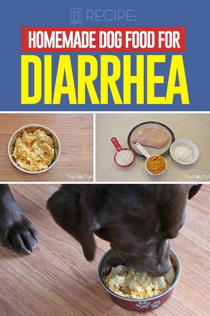 Recipe Homemade Dog Food for Diarrhea Dog medicines