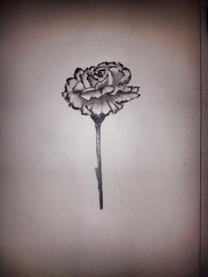 My Moms Favorite Flower Is A Carnation So I Decided To Draw It Was Kind Of Scared Of Drawing The Carnation Tattoo Carnation Flower Tattoo Birth Flower Tattoos