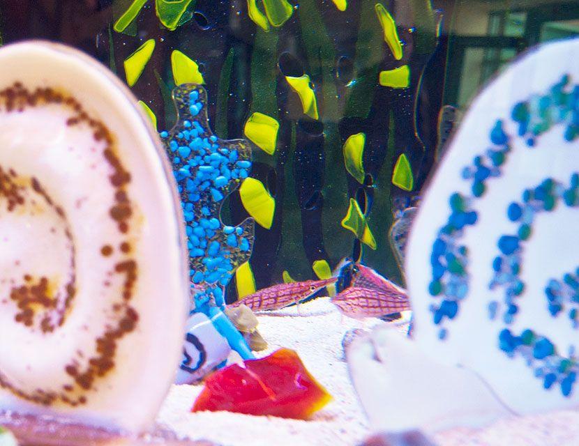 Chula Vista Nature Center Art Aquatic Sea Life