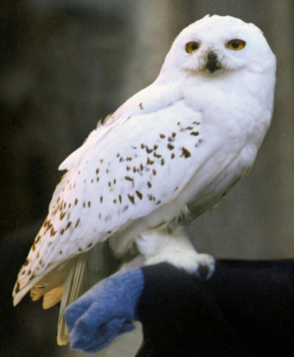 Hogwarts Mystery Owls : hogwarts, mystery, Harry, Potter, Hogwarts, Mystery