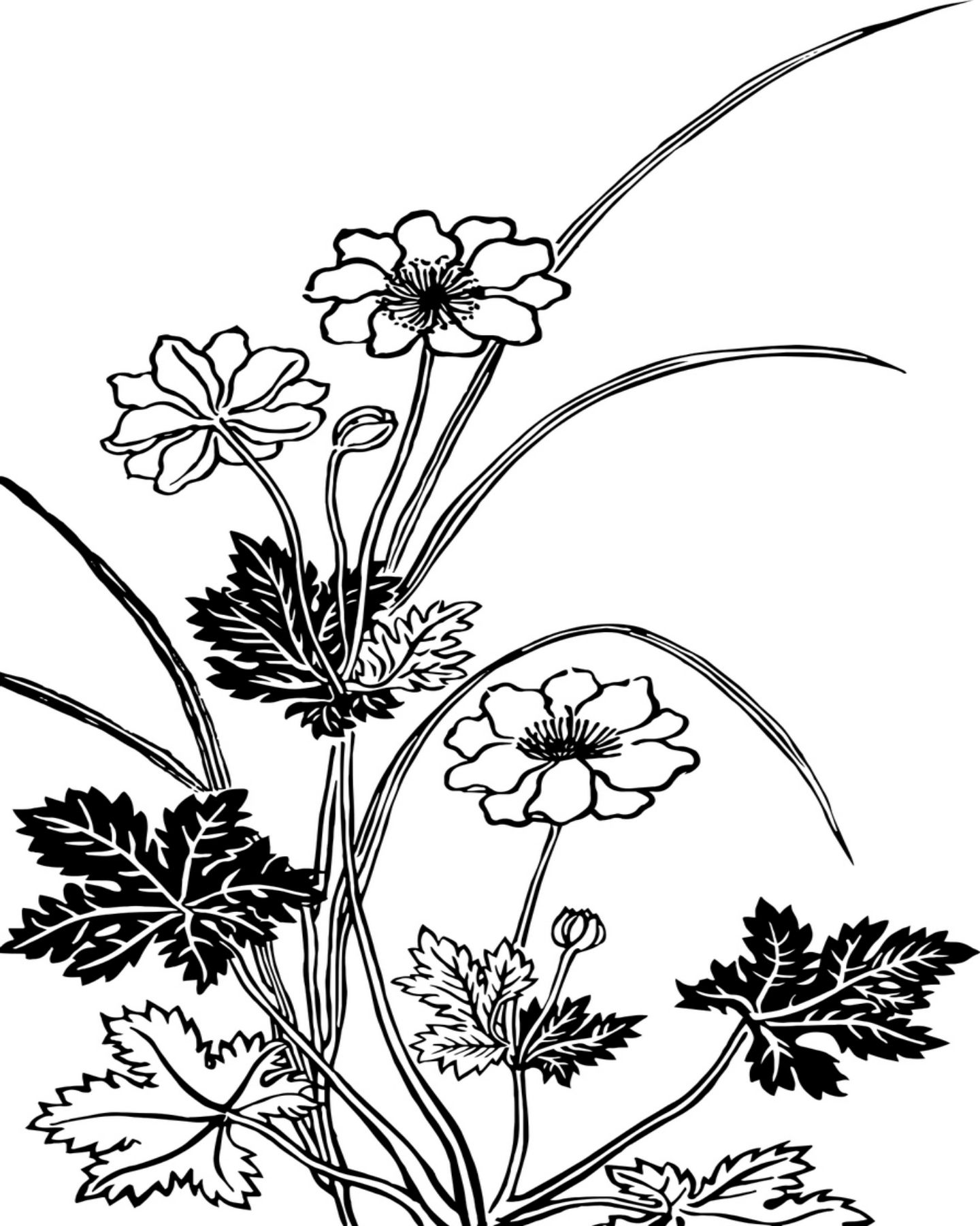 Vintage Flowers Coloring Page White Flower Png Black And White Flowers Digital Flowers