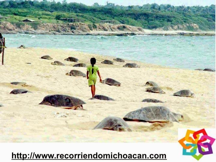 Michoacán te comenta sobre la playa de Ixtapilla,  es este un excelente lugar para ver a las tortugas, que llegan en los meses de octubre y noviembre. Las extensas playas de arena obscura se llenan de cientos de estos bellos animales que llegan a desovar, este es uno de los milagros más espectaculares de la naturaleza. BEST WESTERN DON VASCO PATZCUARO http://www.bwposadadonvasco.com.mx/