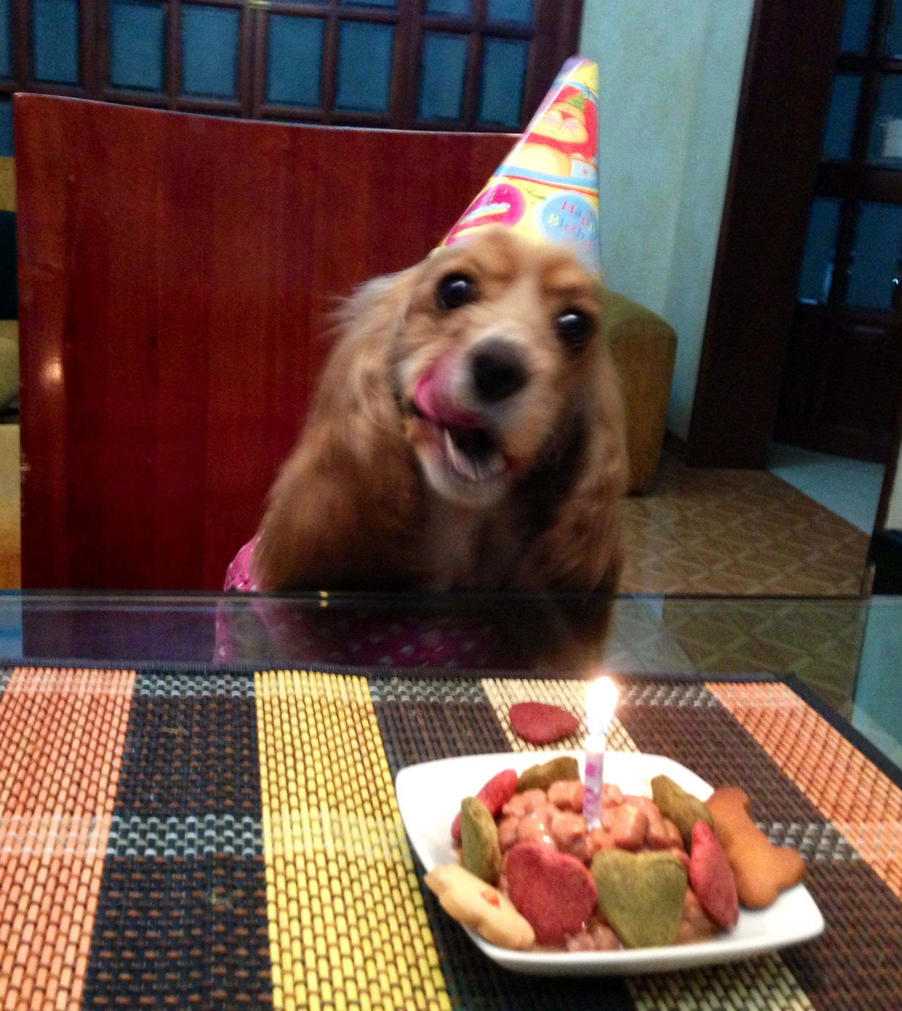 Cocker spaniel birthday pets u others pinterest