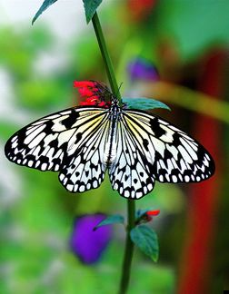 Beautiful Creature Con Imagenes Alas De Mariposa Mariposas Bellas Mariposas