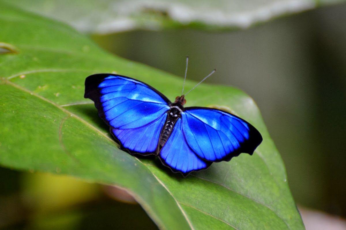 Borboletas e Mariposas: Pernambuco