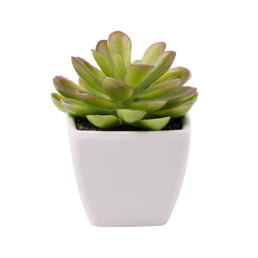 Succulente en pot - Plastique - 2 modèles au choix