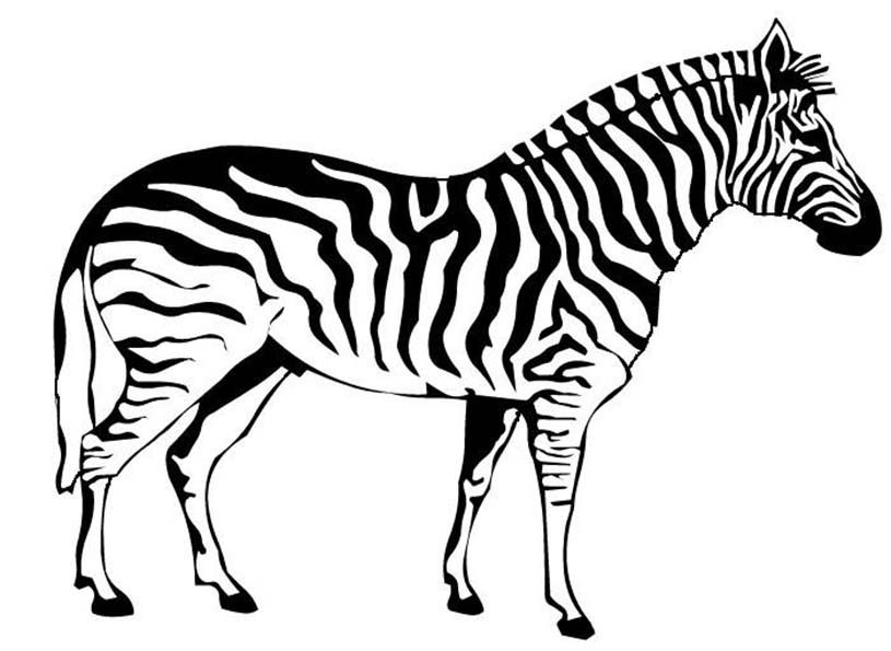 zebra da colorare disegni da colorare animali 12 On zebra da colorare