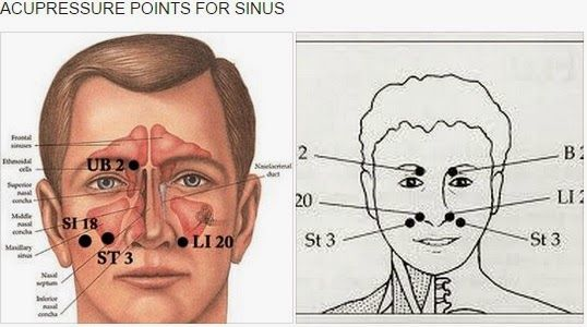 ACUPRESSURE POINTS FOR SINUS : Prof. Dr.F.A.Abdul Nazar ...
