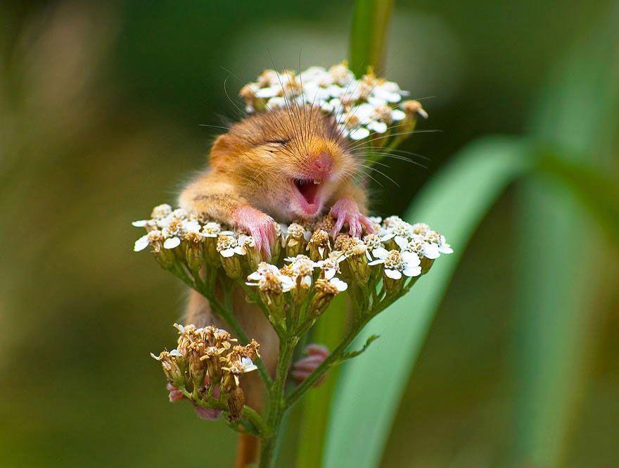 Maus, Blume, lustig | Smini | Pictures | Pinterest | Mäuse, Lustiges ...