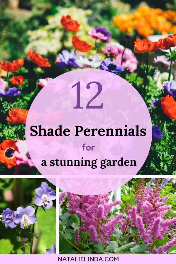 12 Shade Perennials that Will Beautify Sheltered Areas of Your Yard is part of garden Landscaping Borders - Not every flower can tolerate full sun  In fact, some will burn and wither away in hot temperatures and direct sunlight  If you have shady areas of your yard that you want to fill, there are a host of shade perennials that'll help beautify them  Adding shade perennials to your garden can complete your landscape     Read More about 12 Shade Perennials that Will Beautify Sheltered Areas of Your Yard