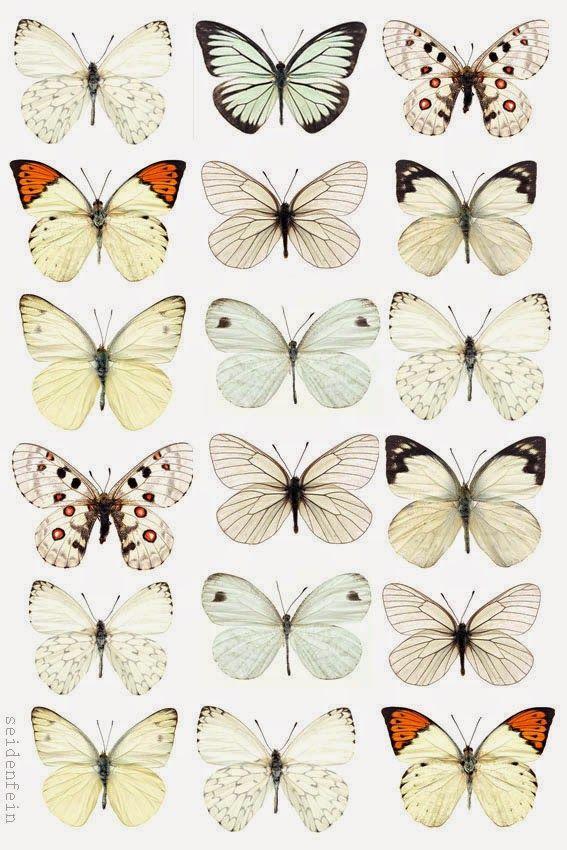 Photo of seidenfeins Dekoblog: DIY summer butterflies made of paper as a wreath * DIY paper …